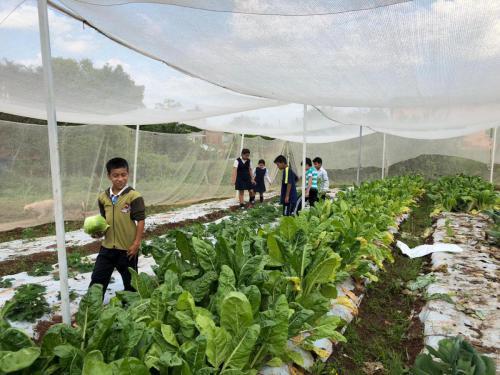 Alumnos y alumnas de la Escuela Río Paraná cosechando repollo y acelga.